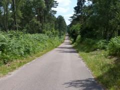 Route en forêt d'Ermenonville