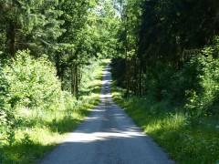 Forêt de Hirson