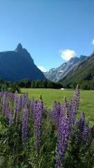 vallée Andalsnes-Dombas Norvège